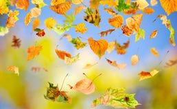 Herbst-Blätter Stockbild