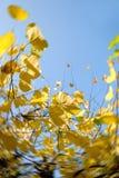 Herbst-Blätter Stockfotografie
