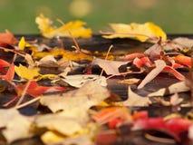 Herbst-Blätter stockfoto