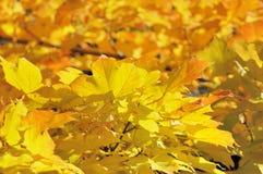 Herbst-Blätter stockfotos