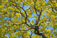 Herbst-Blätter. Stockfotografie