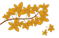 Herbst-Blätter Lizenzfreie Stockfotos