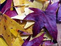 Herbst-Blätter Lizenzfreies Stockfoto