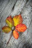 Herbst-Blätter auf dem hölzernen Hintergrund Stockbilder