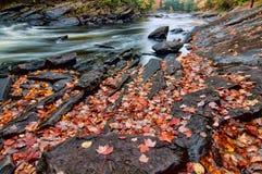 Herbst-Blätter auf eindeutigen Felsen neben Fluss Stockfoto