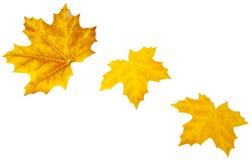 Herbst-Blätter auf Weiß Lizenzfreies Stockbild