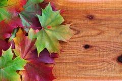 Herbst-Blätter auf Zeder Stockfotos