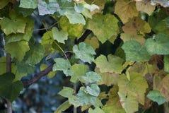 Herbst-Blätter in einem toskanischen Garten, Italien Lizenzfreie Stockbilder