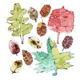 Herbst-Blätter eingestellt Lizenzfreie Stockfotos