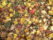 Herbst-Blätter gefallen Lizenzfreies Stockfoto
