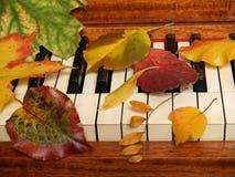 Herbst-Blätter Tickle das Ivories Lizenzfreies Stockbild