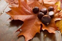 Herbst-Blätter und Kastanien Stockfotos