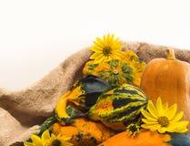 Herbst. Blätter von wilden Trauben und von Kürbis Lizenzfreies Stockfoto