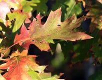 Herbst-Blatt stockfotos