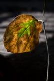Herbst-Blatt Stockfoto