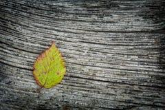 Herbst-Blatt auf dem hölzernen Hintergrund Stockbild