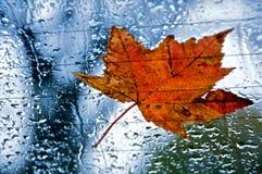 Herbst-Blatt auf regnerischem Fenster Stockfotografie