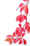Herbst-Blatt-Feld Lizenzfreies Stockbild