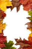 Herbst-Blatt-Feld Lizenzfreie Stockfotos