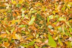 Herbst-Blatt-Hintergrund Lizenzfreie Stockfotografie