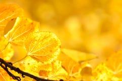 Herbst-Blatt-Hintergrund Lizenzfreie Stockbilder
