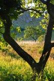 Herbst bokeh 14 Lizenzfreies Stockbild