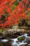 Herbst bokeh Lizenzfreies Stockbild