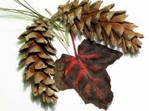 Herbst boquet Stockfoto