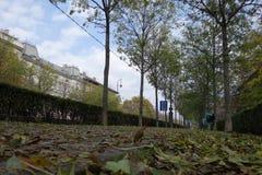 Herbst in Budapest lizenzfreies stockfoto