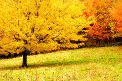 Herbst-Bäume Stockfotos