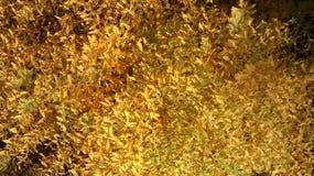 Herbst Busch 免版税图库摄影