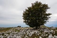 Herbst in Cansiglio Lizenzfreies Stockfoto