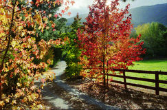Herbst in Carmel Tal Lizenzfreie Stockfotos