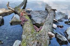 Herbst concet Pilz und Wasser stockfoto
