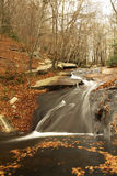Herbst-in-d-Wald Stockfoto