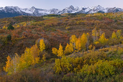 Herbst-Dallas-Verteilung Kolorado Stockfoto