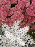 Herbst, dekoratives Moos dekoratives Moos auf dem Stein, Immergrün stockfoto