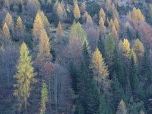 Herbst in den Bäumen Stockbild