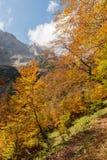 Herbst in den bayerischen Alpen Stockbild