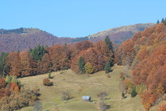 Herbst in den Bergen (Reihe Svidovets in den ukrainischen Karpatenbergen) Stockfotos