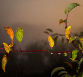 Herbst, der bunte Blätter anfängt Stockfotografie
