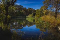 Herbst an der Eiche Glen Preserve lizenzfreies stockbild
