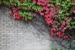 Herbst in der Farbe Stockbilder