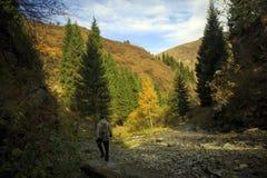 Herbst in der Gebirgsschlucht lizenzfreies stockfoto