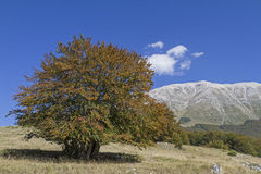 Herbst in der Majella Stock Photography