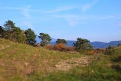 Herbst in der Natur Stockbild