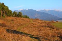Herbst in der Natur Lizenzfreies Stockbild