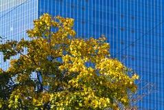 Herbst in der Stadt lizenzfreie stockfotos