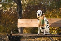 Herbst in der Stadt lizenzfreies stockbild