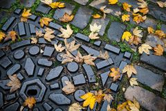 Herbst in der Stadt Blätter auf der Abwasserkanalluke Stockbild